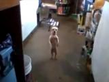 Самая смешная танцующая собака в мире - чик чики бум видео бесплатно скачать на телефон или смотреть онлайн Поиск видео_0_143167