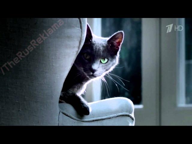 Реклама Sheba Pleasure 2015   Шеба - Следуй своим желаниям