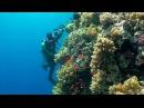 Дайвинг в Красном море. Египет