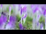 Andre' Rieu -  I Have a Dream -  ABBA