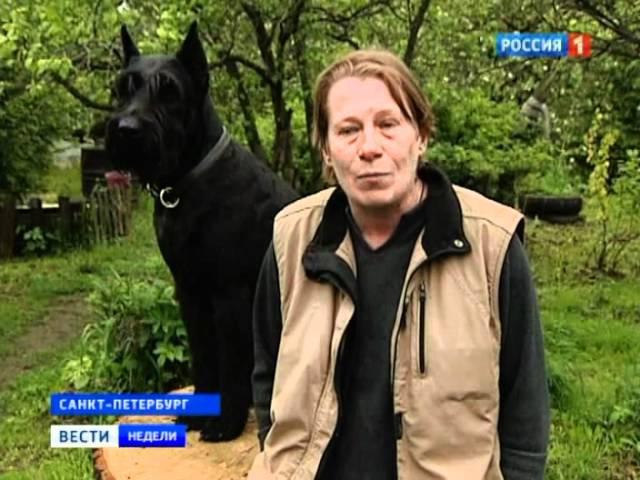Догхантеры за людей и против зоошизы: forum.doghunter.to/