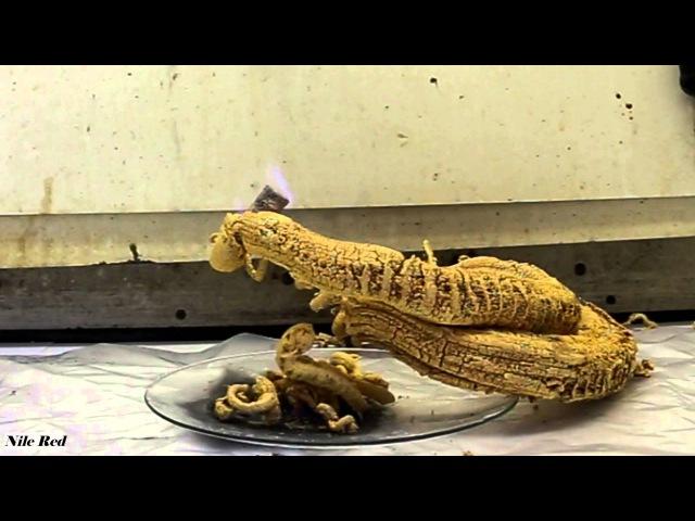 Pharaoh's Serpent Demonstration