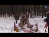 медведь и модельки