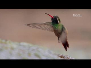 Путешествие на край света с Артом Вольфом: 22 серия. Мексика - Полуостров Баха