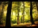 Wer hat dich, du schoener Wald