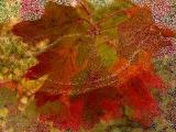 Листья жёлтые ( Анжелика Варум и Дмитрий Маликов)