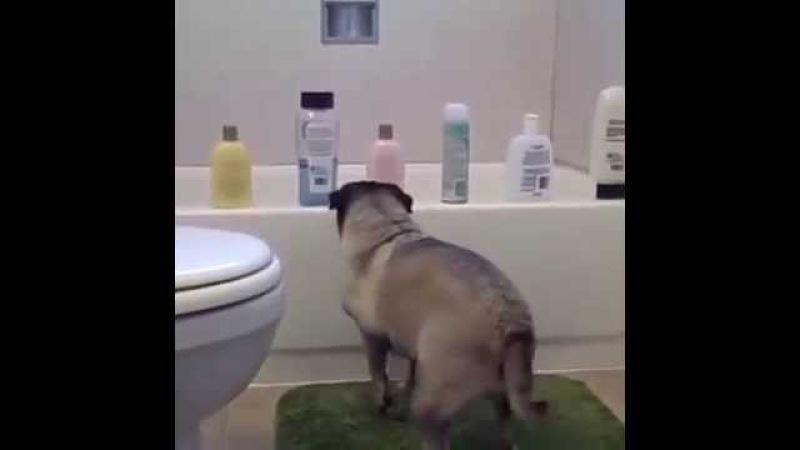 Pug Life Vine By chad jamian