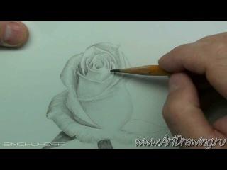 Как нарисовать белую розу простым карандашом поэтапно