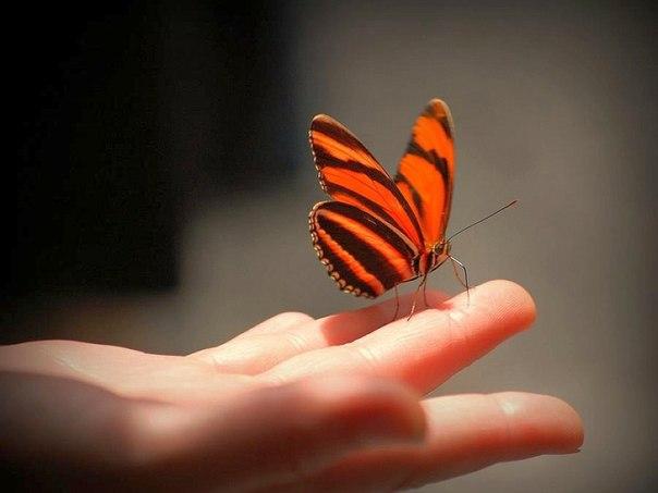Счастье-это..... Счастье подобно бабочке. Чем больше ловишь его, тем больше оно ускользает. Но если вы перенесете свое внимание на другие вещи, оно придет и сядет вам на плечо. (Виктор Франкл)
