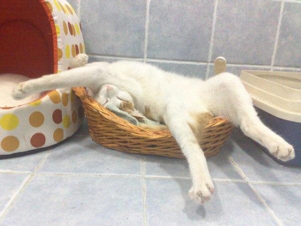 🌷 Я сплю... Я просыпаюсь... Как широка Постель, когда нет рядом никого.