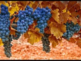 Georgia – The Homeland of Wine / Грузия – Родина вина