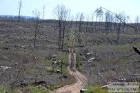 004 мая 2014 - Лес Тольятти. 4 года после пожара