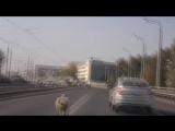 Баран просто хотел жить! Курбан Байрам в Казани...