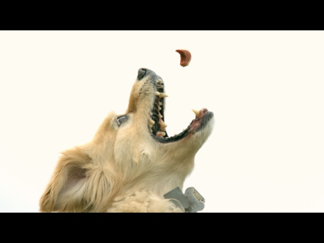 Leaping Slow Motion Doggy - The Slow Mo Guys
