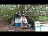 Пчеловодство для начинающих! Весеннии работы