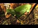 Дикая природа Амазонки [2_2] Дикое царство