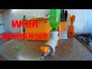 Как сделать мини диспенсер для напитков Dispenser for beverages