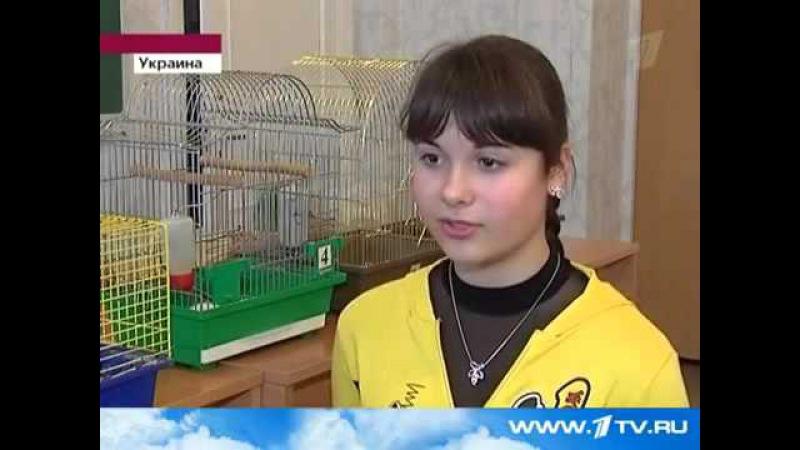 Опыт над крысами помог отучить детей от дерьма
