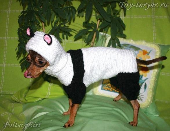вязание для собак и кошек