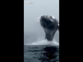 Захватывающий прыжок кита