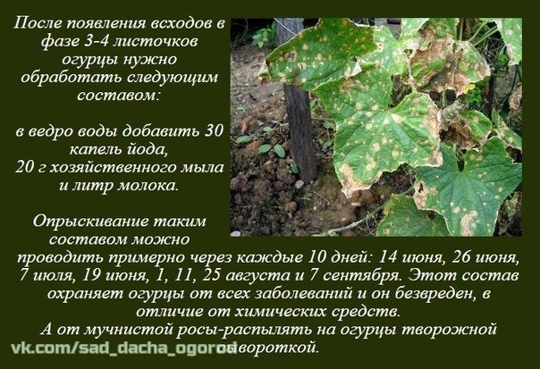 Нетрадиционные методы выращивания растений, маленькие хитрости QCdtpRJLJ3o