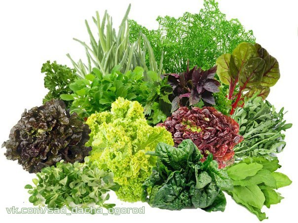 Нетрадиционные методы выращивания растений, маленькие хитрости _8uuVHiddQ0