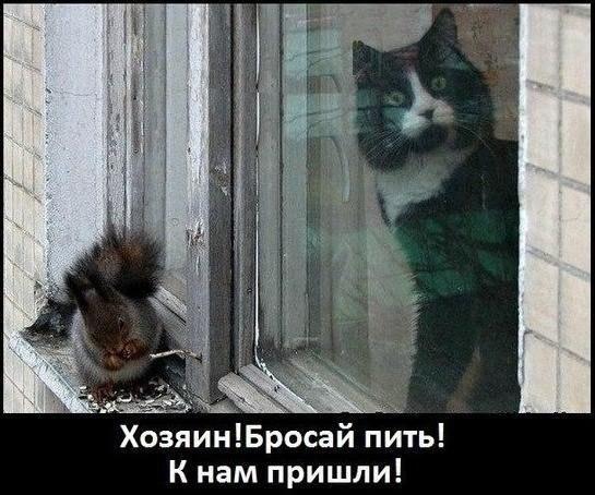 http://cs623220.vk.me/v623220798/16c84/CdGMuFguOQ4.jpg