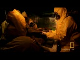 Investigating Baby Mammoth