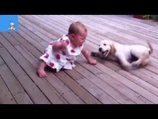 Best Funny Animals & Babies Compilation 2014