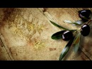 Мир Библии 4. Библейские животные