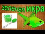 Как сделать зеленую икру своими руками в домашних условиях   How to make green caviar