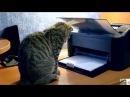 Cele mai tari faze cu pisici!