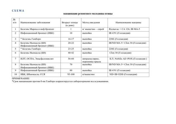 Схема вакцинации ремонтного