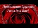 Пожелания друзьям Розы для Вас