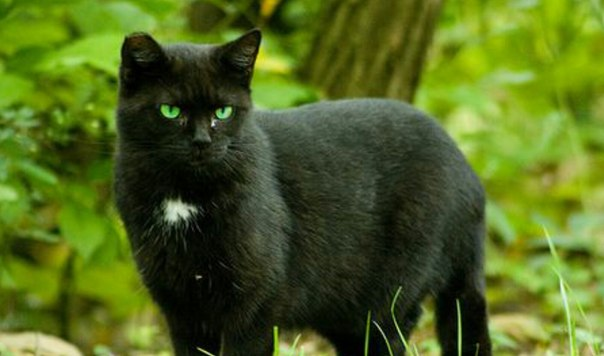 natural flea spray for cats recipe
