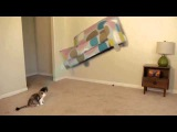 CAT GOT A POWER !!! FUNNY !!! FAIL 2015 !!!