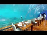 Нереально красив! Подводный ресторан, Мальдивы. Maldives A trip to Paradise
