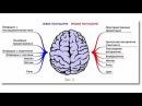 Как запустить мозги