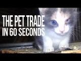 Торговля домашними животными за 60 секунд