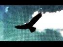 BIRD SONGS of DOOM