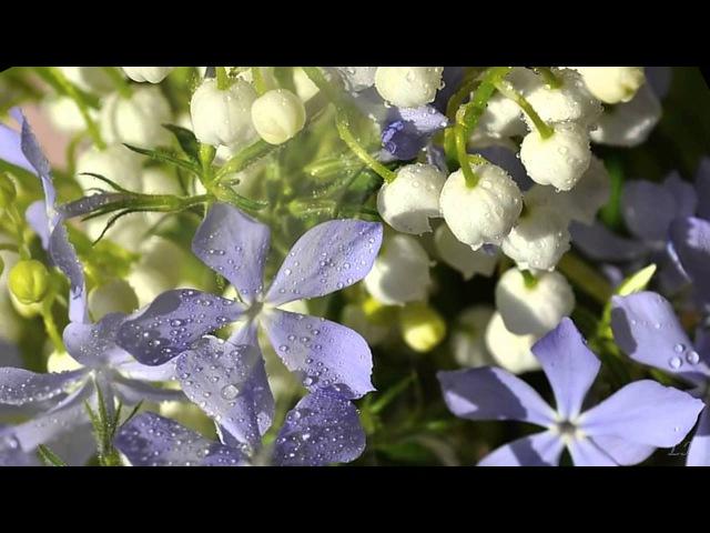 Ф Шопен Вальс № 7 весна F Chopin Waltz № 7 spring