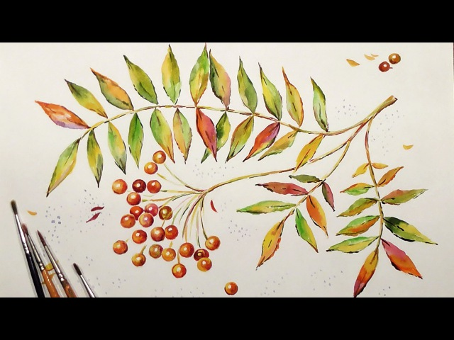 Speed Painting | Twig of Rowanberry | Watercolor | IOTN