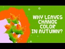 Why Do Leaves Change Color In Autumn Fall Facts about autumn for kids