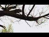 Хроноп  Деревенская песня