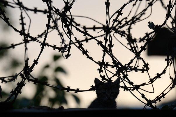 На территории военной части внутренних войск в Луганске, взятой под контроль ополченцами
