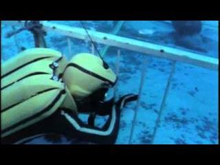Подводная одиссея команды Кусто: 2 Акулы