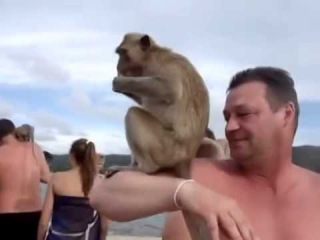 СМЕШНО КОМЕДИЯ ГЕЙ остров обезьян Тайланд *( *(