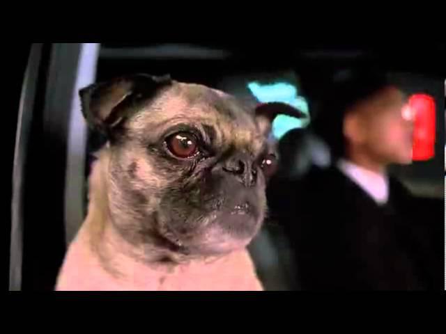 Фрэнк Frank the Pug мопс из к ф Люди в черном Люди в Чёрном 2 Men in Black II 2002 отрывок
