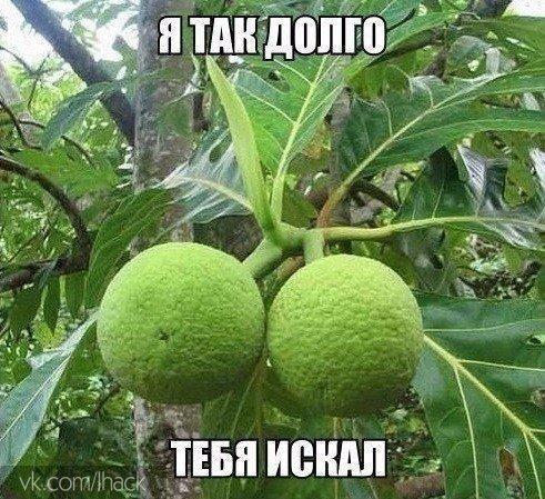 В лесах Индии растет растение калир-канда, называемое на местном наречии «обмани...