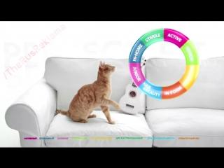 Реклама Perfect Fit In-Home (Перфект фит) Кот Могу но не хочу
